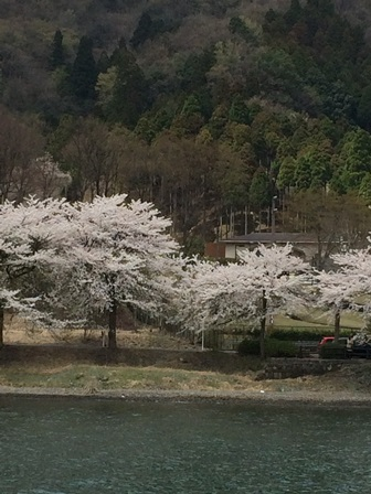 20150411hanami_10.JPG