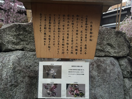 20160403sakura (7).JPG