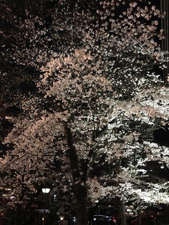 20170405桜 (3).JPG